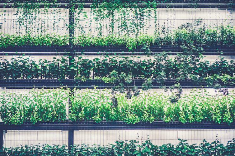 Sacramento nurseries succulents vegetable garden